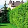 Надежный и красивый зеленый забор